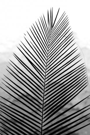 Amazonia #8