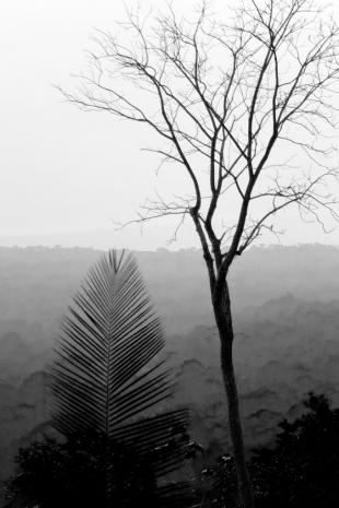 Amazonia #9