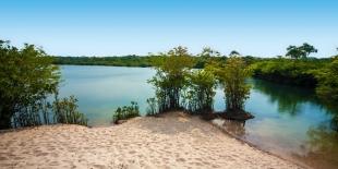 Amazonia #13