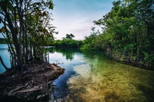Amazonia #7