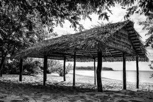 Amazonia #70