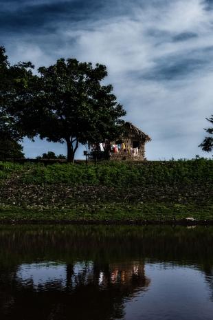 Amazonia #56