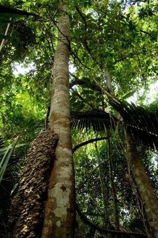 Amazonia #39