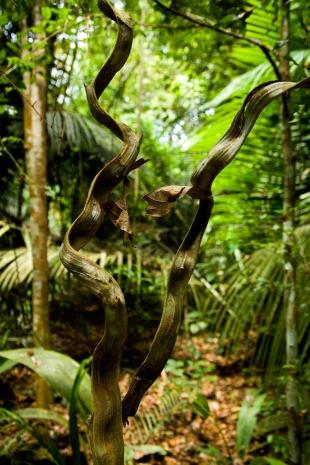 Amazonia #38