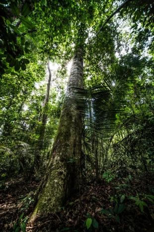 Amazonia #34