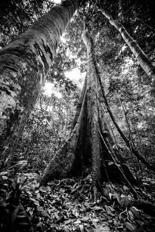 Amazonia #32