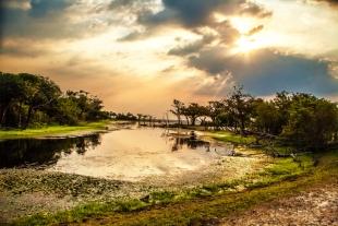 Amazonia #14