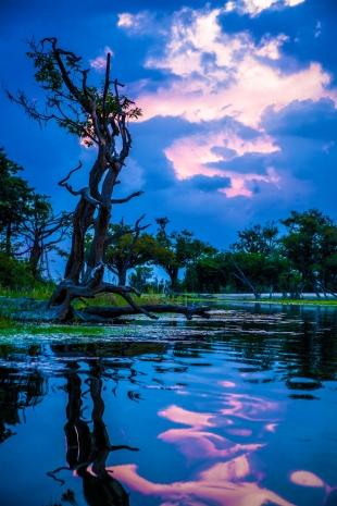 Amazonia #24