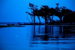 Amazonia #19