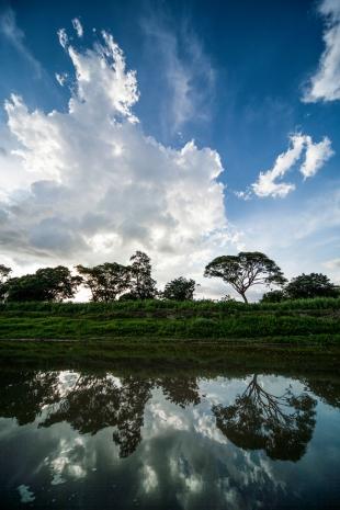 Amazonia #3