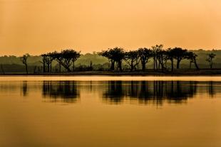 Amazonia #82