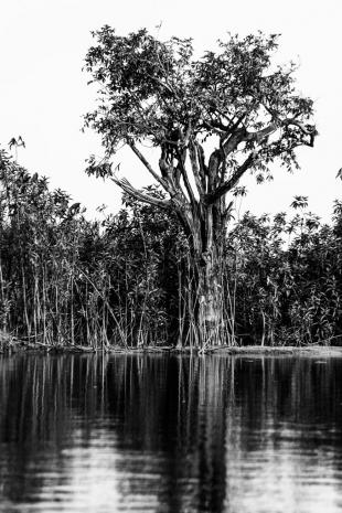 Amazonia #81