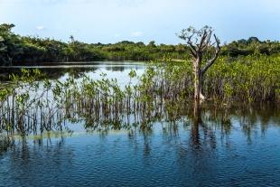 Amazonia #80