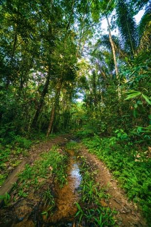 Amazonia #76