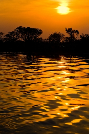 Amazonia #4