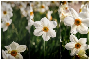 Compose White Flowers #1
