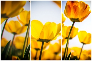 Compose Yellow Flowers #1