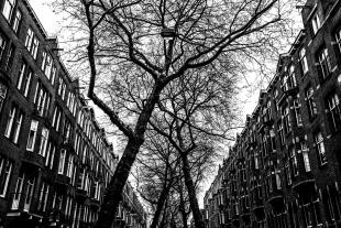 Triângulo das Árvores