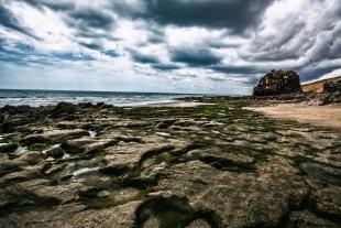 Coral Landscape #1