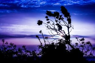 Sunset Folhagens #2