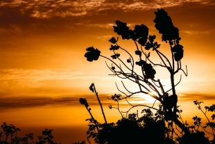 Sunset Folhagens #1