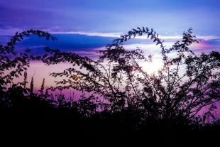 Sunset Folhagens #3