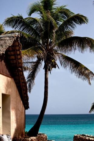 Caribe #52