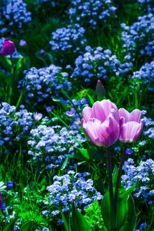 Amsterdam Flores #14