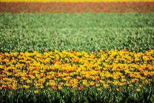Amsterdam Flores #15
