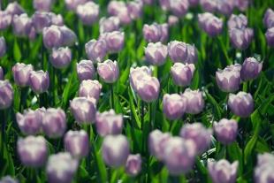 Amsterdam Flores #13