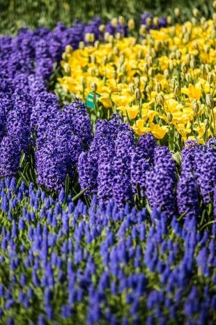 Amsterdam Flores #18