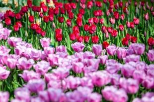Amsterdam Flores #19