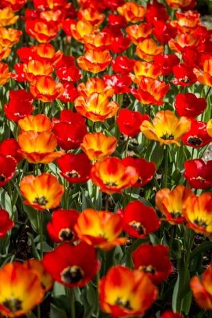 Amsterdam Flores #21