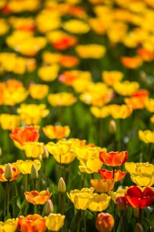 Amsterdam Flores #22