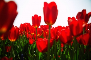 Amsterdam Flores #25