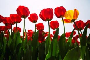 Amsterdam Flores #8