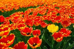 Amsterdam Flores #2