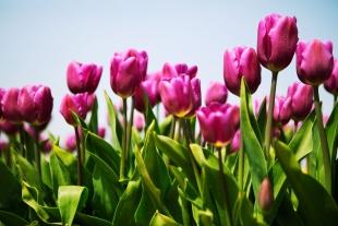 Amsterdam Flores #6