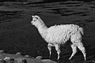 Atacama #25