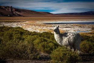 Atacama #26