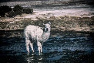 Atacama #94