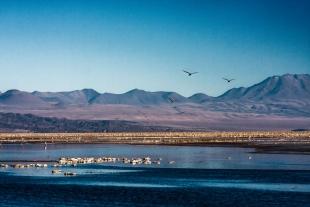 Atacama #9