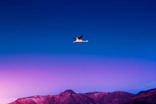 Atacama #10