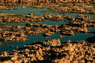 Atacama #39