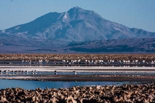 Atacama #12