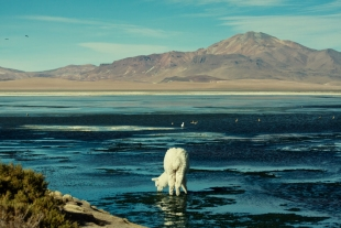 Atacama #28