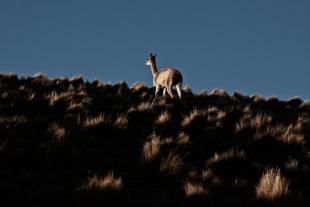 Atacama #40
