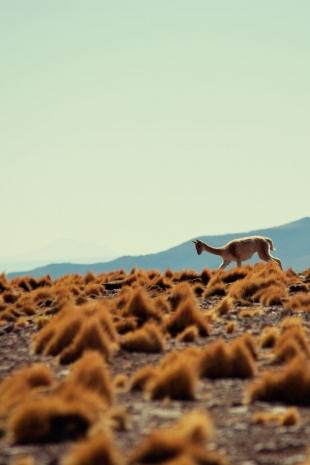 Atacama #70