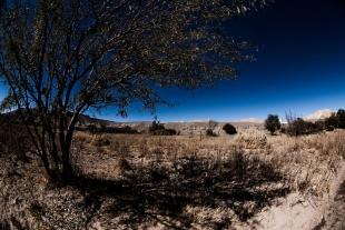 Atacama #75
