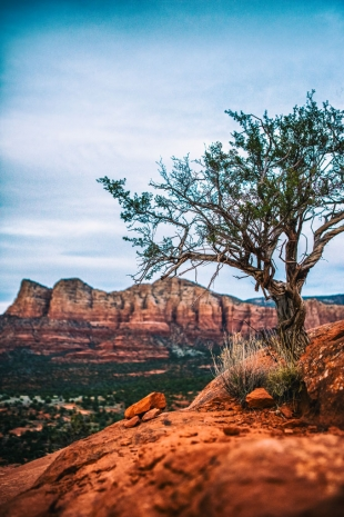 Arizona #86